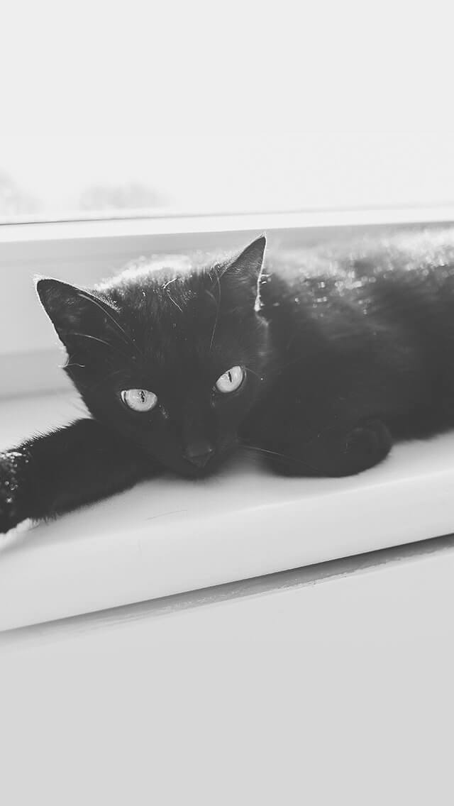 black-cat-animal-cute-watching-iphone-5
