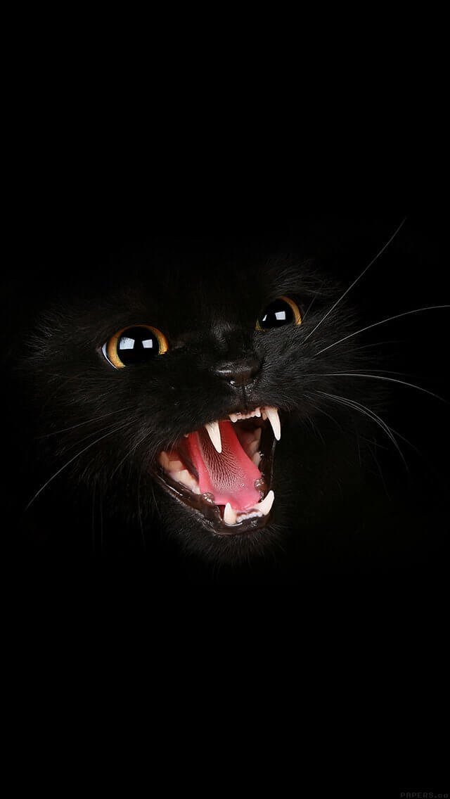 black-cat-roar-animal-cute-iphone-5