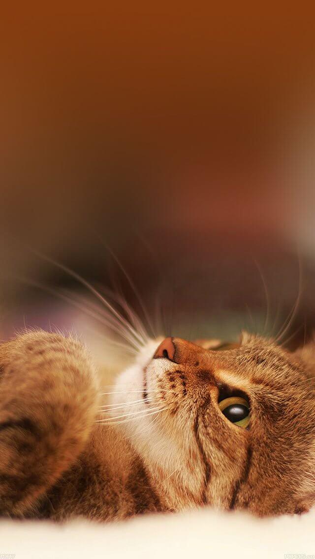 cat-in-bed-animal-nature-iphone-5
