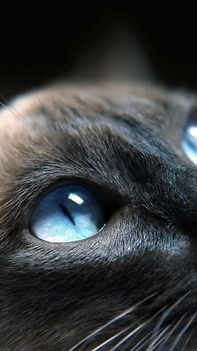 cats-blue-eye-cute-iphone-5