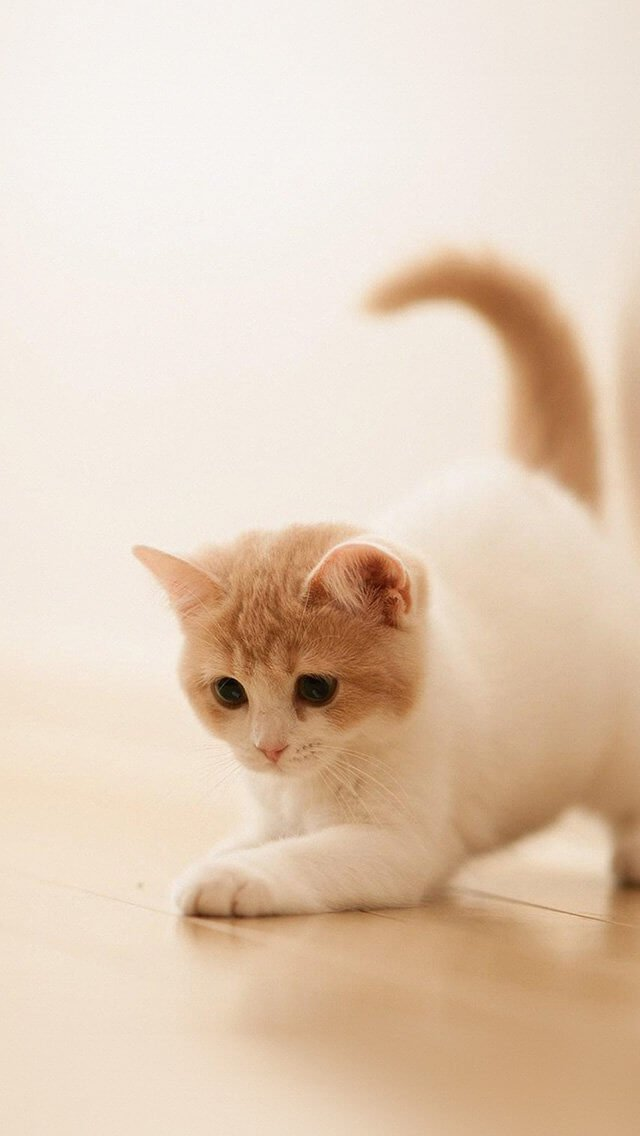 cute-cat-kitten-animal-iphone-5