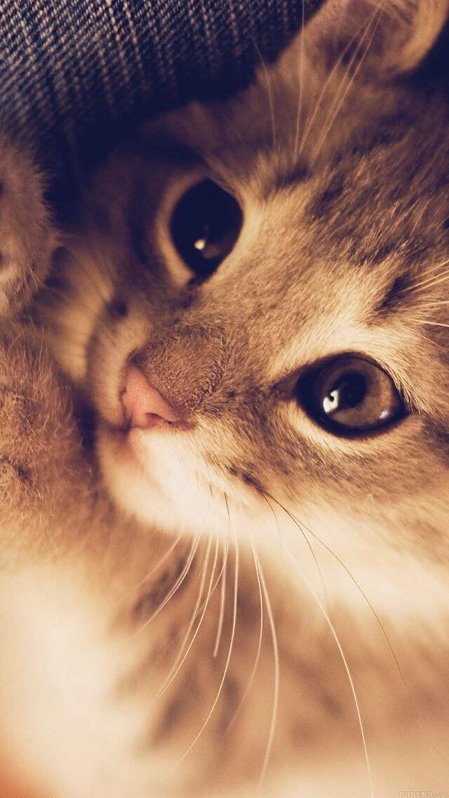 cute-cat-kitten-nature-animal-iphone-5