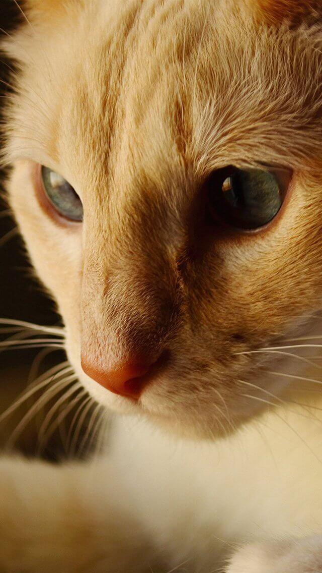 cute-orange-animal-iphone-5