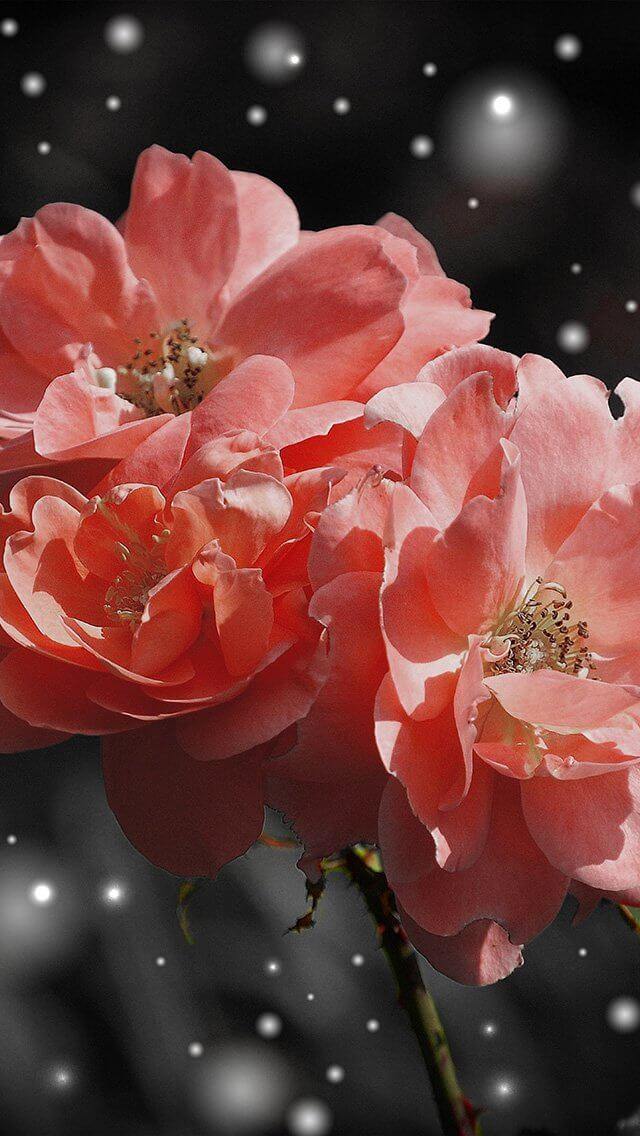 flower-pink-snow-nature-art-iphone-5