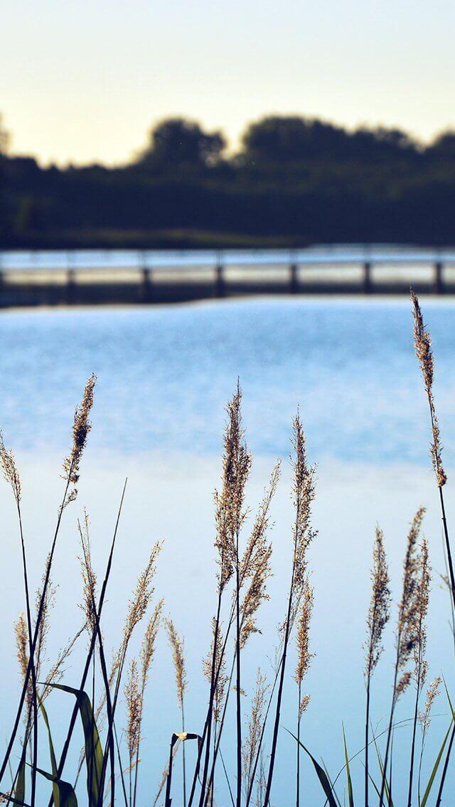 lake-view-flower-water-calm-nature-bokeh-blue-iphone-5
