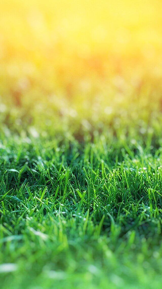 lawn-flower-green-bokeh-nature-iphone-5