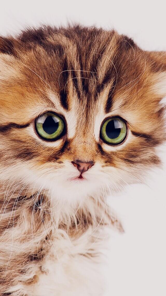 sad-kitten-cat-animal-nature-cute-iphone-5