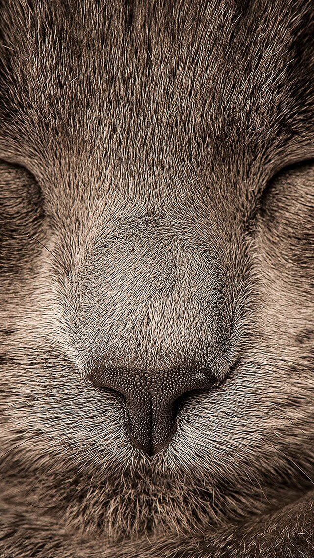 sleeping-cat-zoom-nature-iphone-5