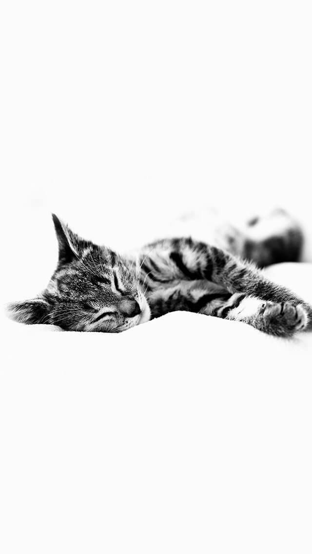 sleepy-cat-kitten-white-animal-iphone-5