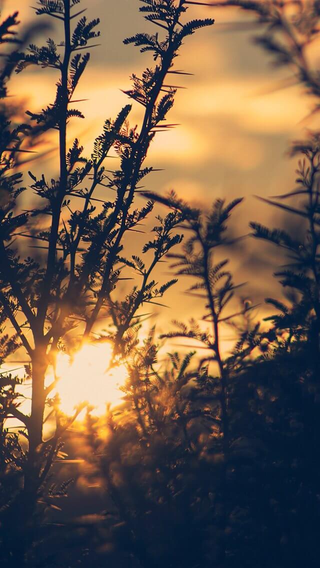 sunset-tree-light-flare-bokeh-nature-photo-iphone-5