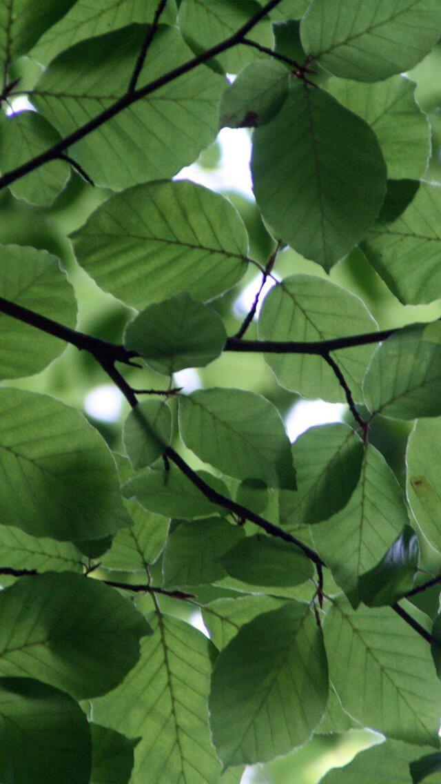 tree-blossom-nature-leaf-green-iphone-5