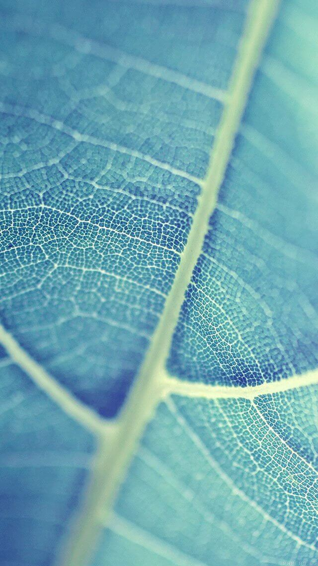 bokeh-blue-nature-iphone-5