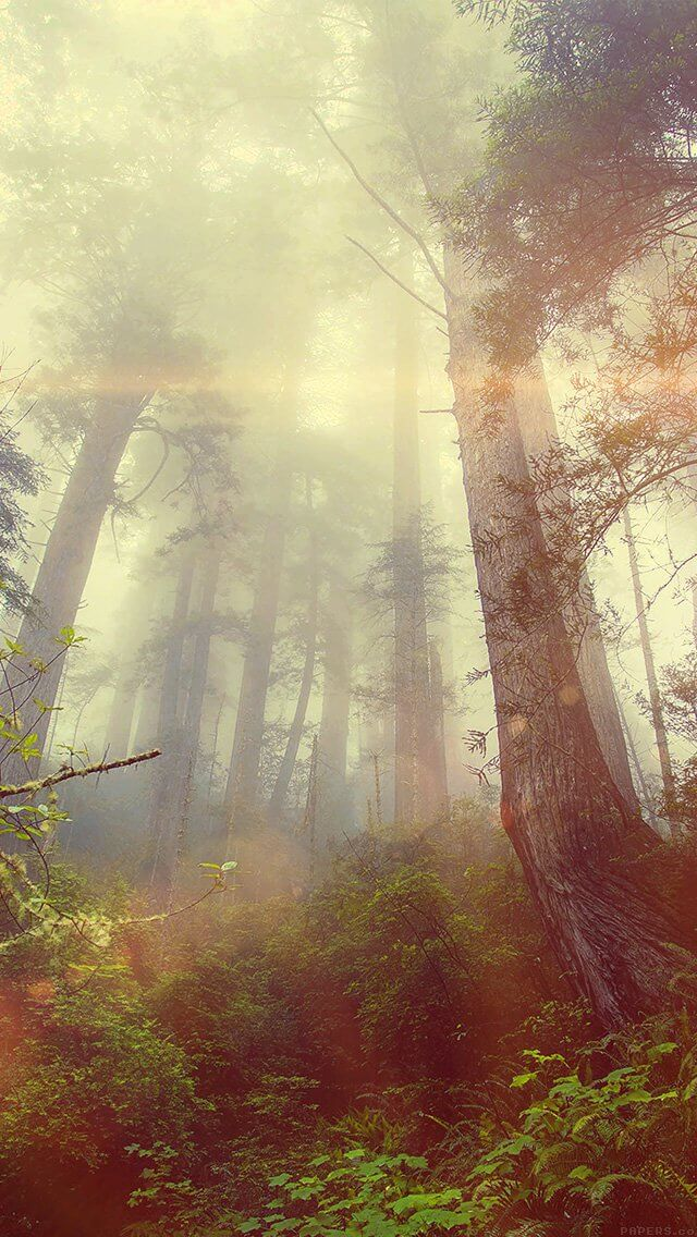 forest-wood-fog-flare-red-nature-green-iphone-5