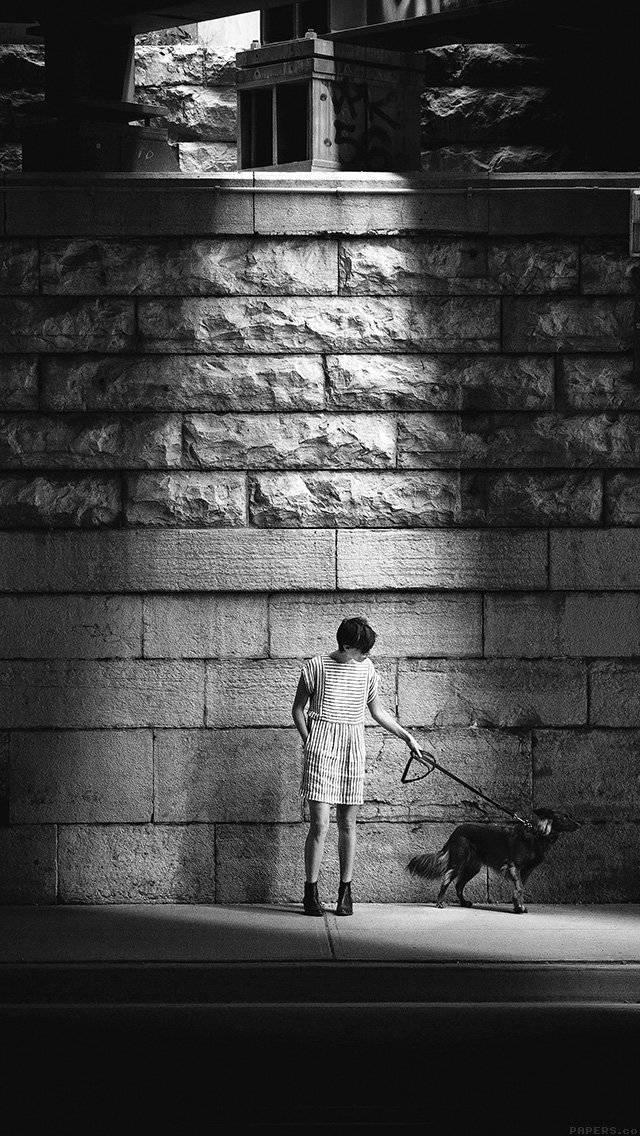dog-street-dark-bw-matthew-wiebe-iphone-5