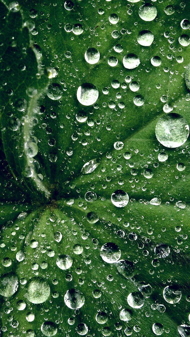 drop-on-leaf-summer-green-live-iphone-5