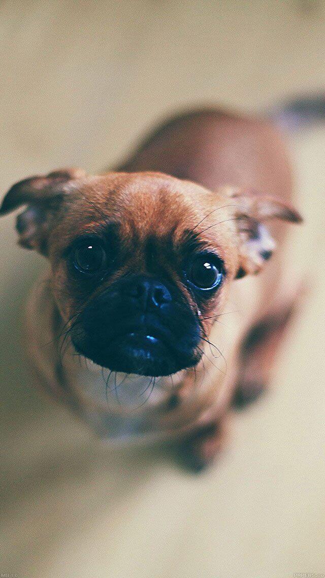 feed-me-animal-dog-iphone-5