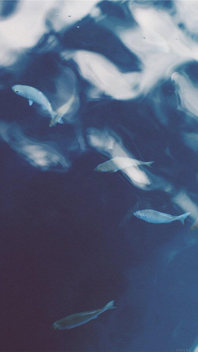 fish-nature-blue-iphone-5