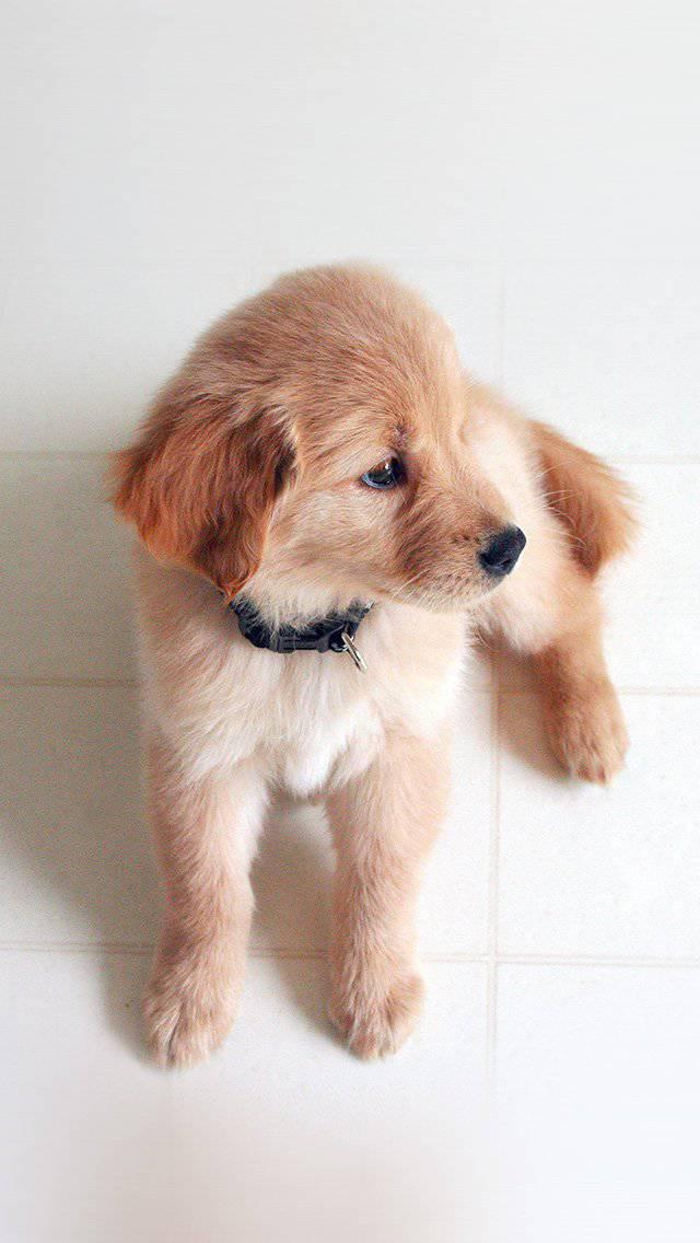 love-cute-animal-nature-sitting-dog-iphone-5
