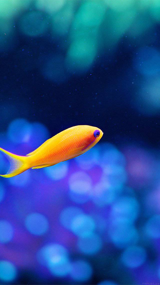 ocean-sea-animal-nature-iphone-5