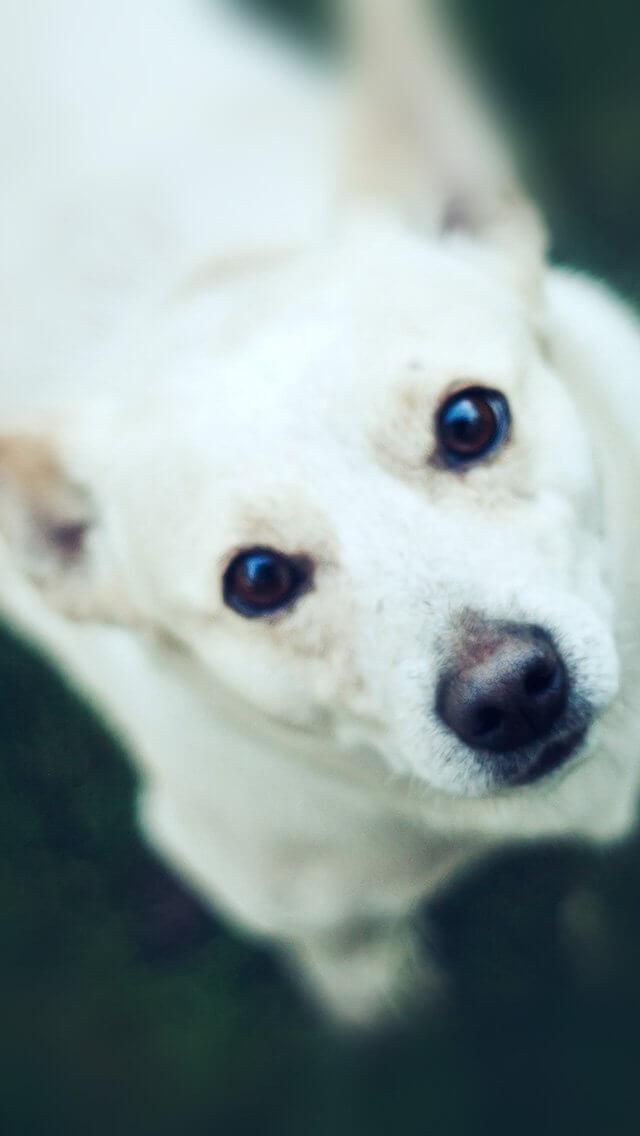 watching-white-animal-love-iphone-5