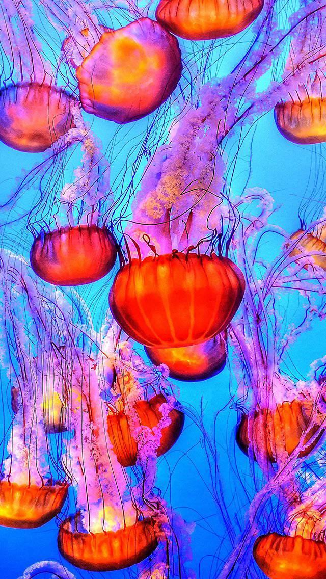 water-ocean-red-blue-iphone-5