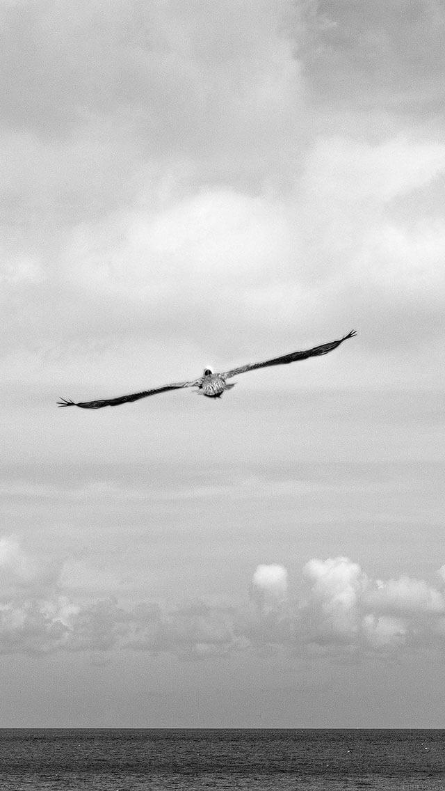 are-you-jonathan-animal-bird-iphone-5