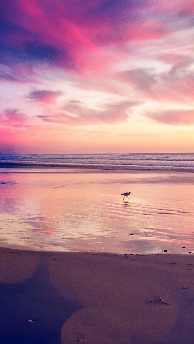 beach-bird-red-orange-nature-sea-bokeh-iphone-5