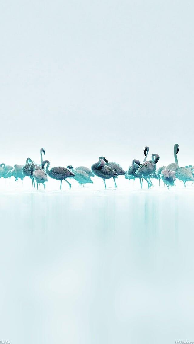 blue-peace-animal-nature-birds-iphone-5