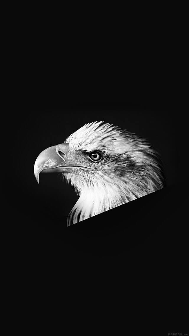 dark-animal-bird-face-bw-iphone-5