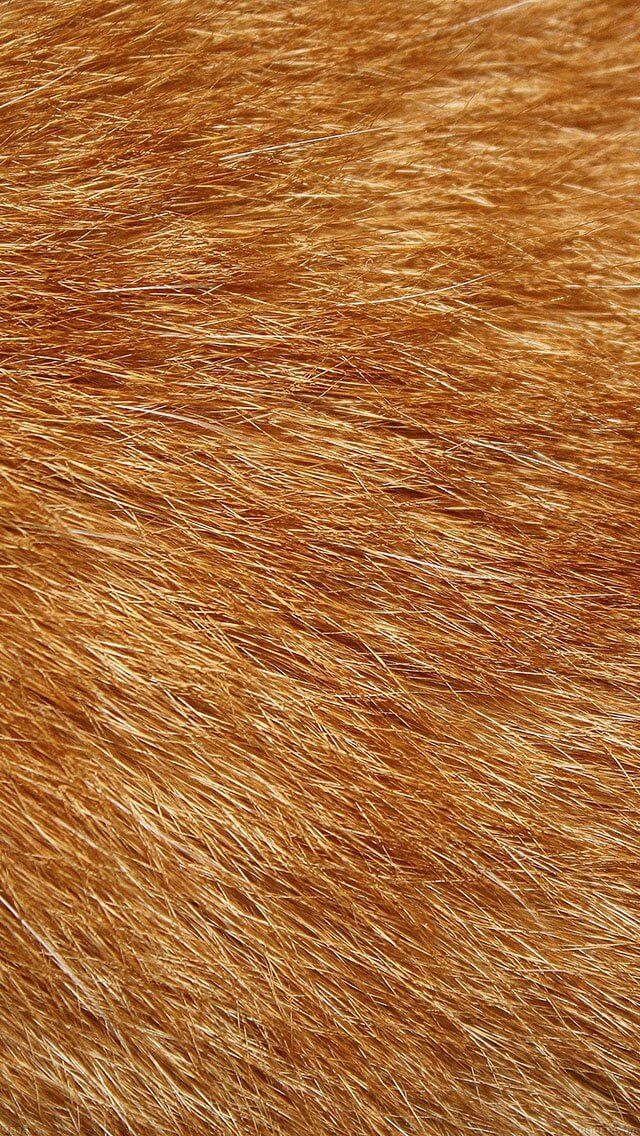 dog-fur-pattern-iphone-5
