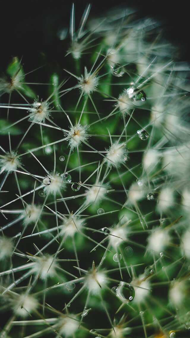 flower-micro-zoom-iphone-5