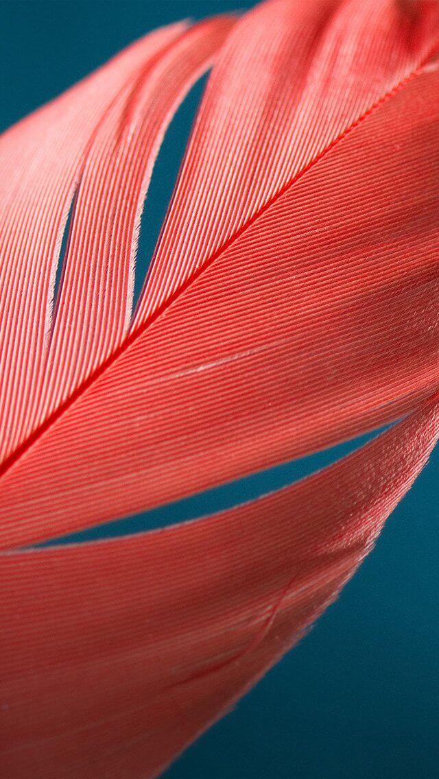 style-bird-feather-pattern-iphone-5