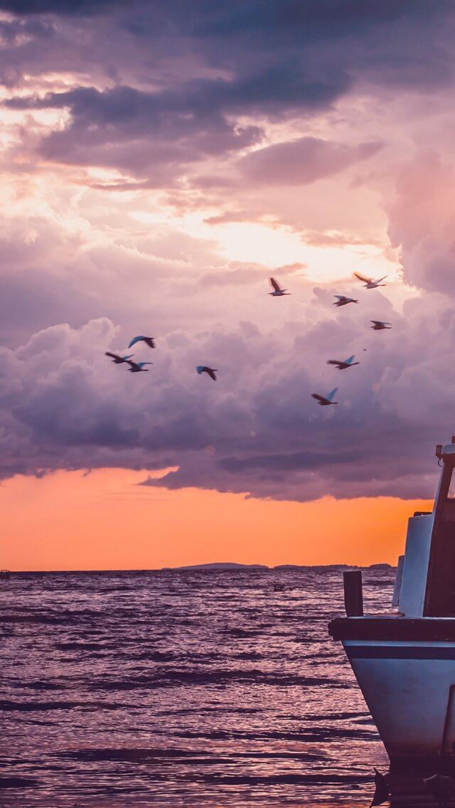 sunset-birds-sky-ocean-ship-nature-flare-iphone-5