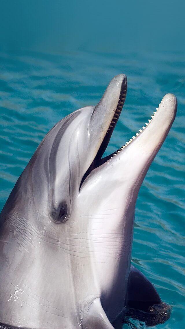 Звук дельфина на смс скачать