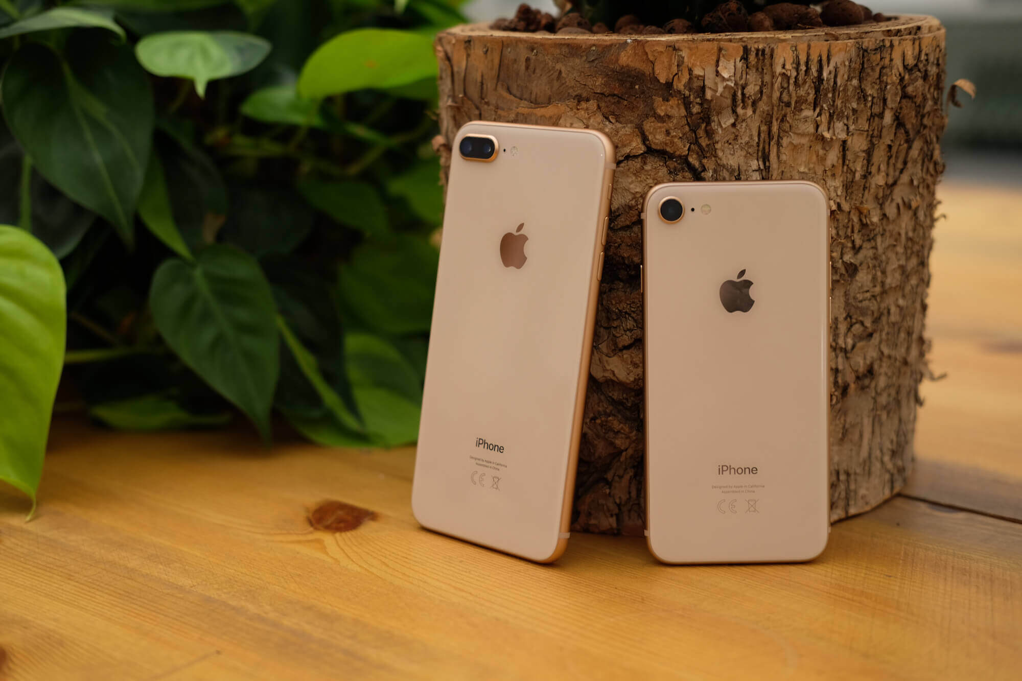 iPhone 8 подешевел в России