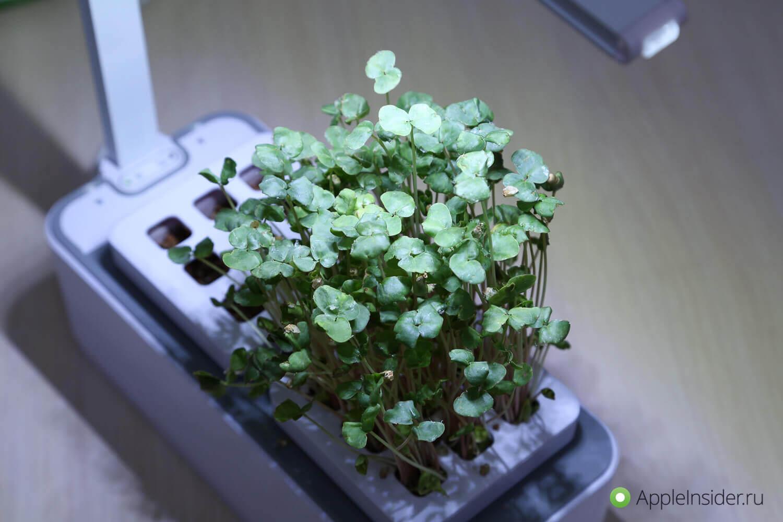 iGarden LED: умный сад, который могла выпустить Apple — The IT-Files